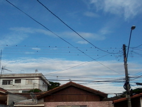Birds On the Wires #1: Pic